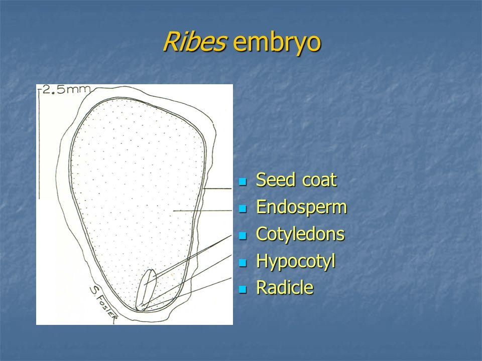 Ribes embryo Seed coat Endosperm Cotyledons Hypocotyl Radicle