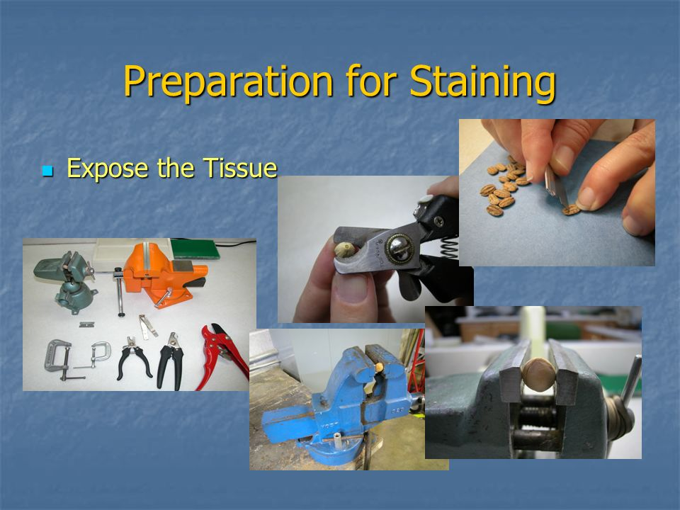 Preparation for Staining