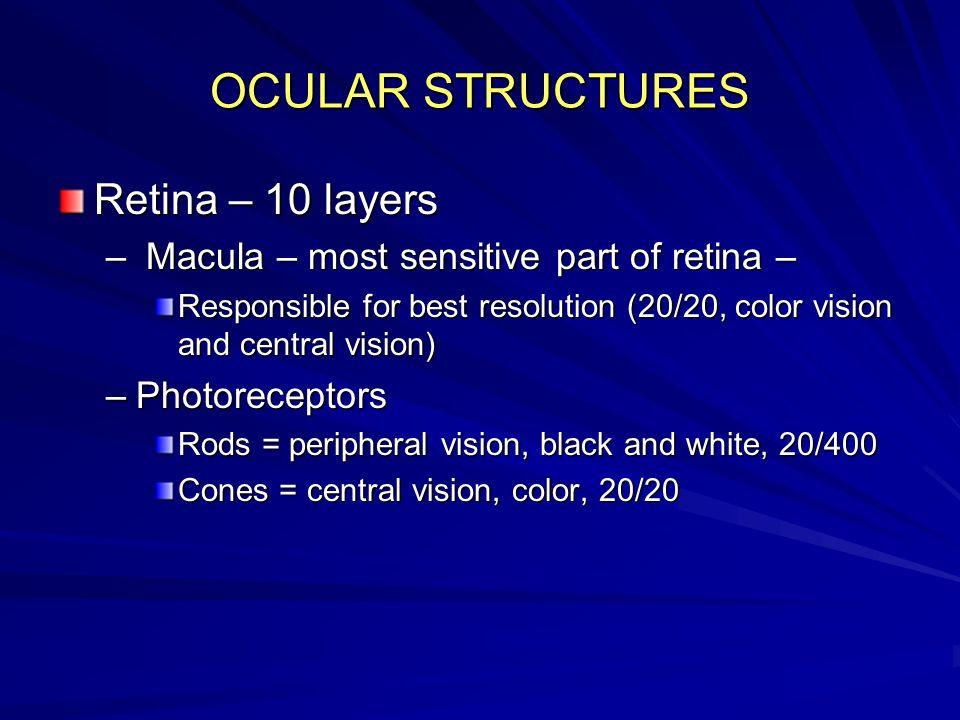 OCULAR STRUCTURES Retina – 10 layers