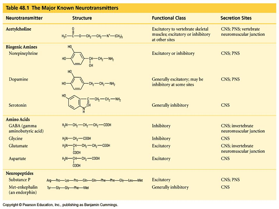 There are a variety of neurotransmitters