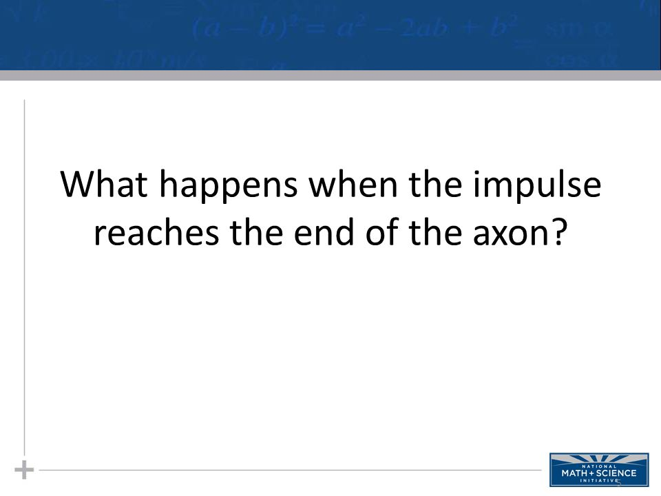 What happens when the impulse reaches the end of the axon