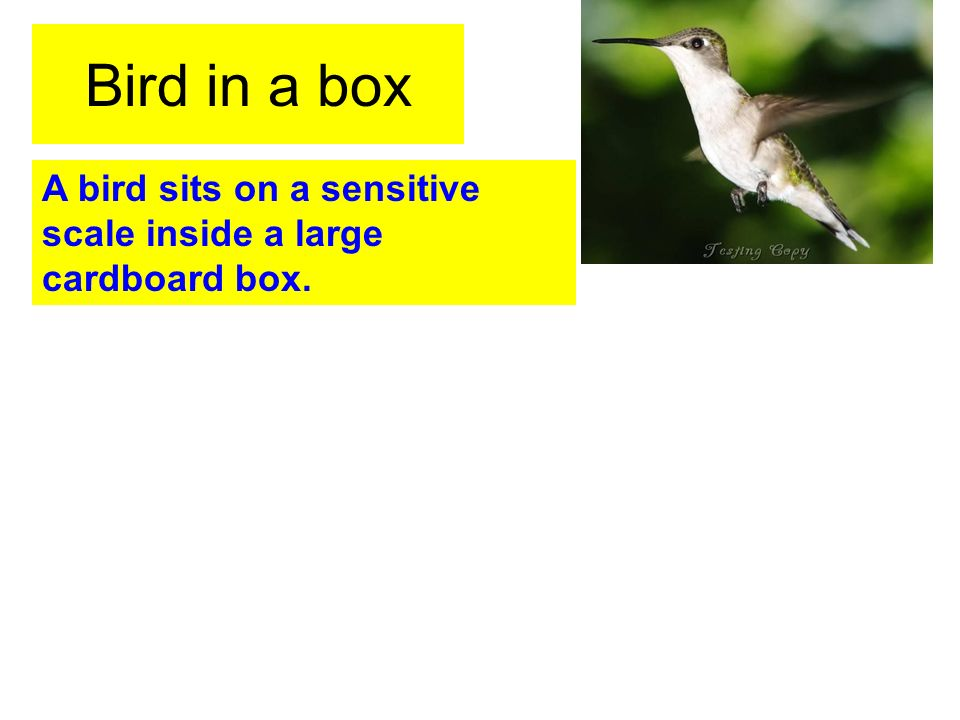 Bird in a box A bird sits on a sensitive scale inside a large cardboard box.