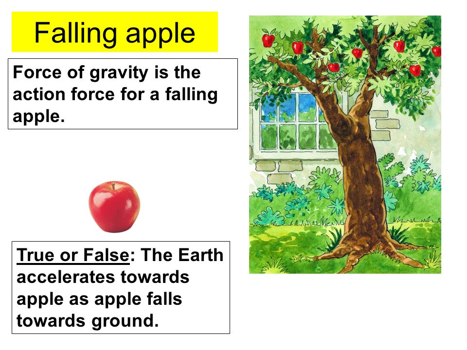 Falling apple Force of gravity is the action force for a falling apple.