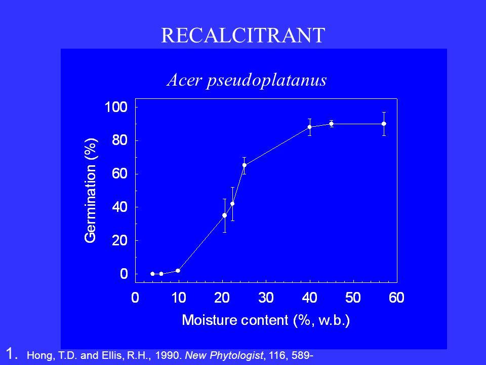 RECALCITRANT Acer pseudoplatanus