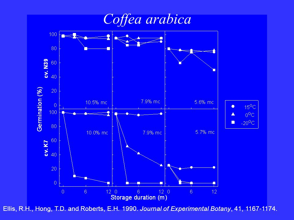 Coffea arabica Ellis, R.H., Hong, T.D. and Roberts, E.H.