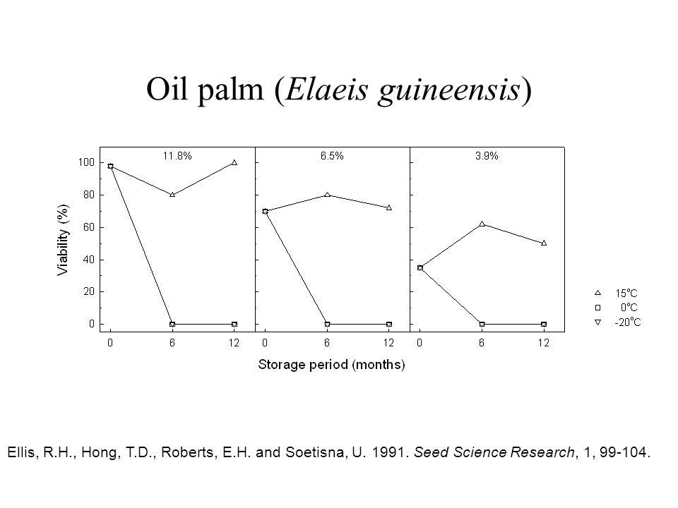 Oil palm (Elaeis guineensis)