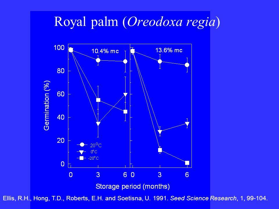 Royal palm (Oreodoxa regia)