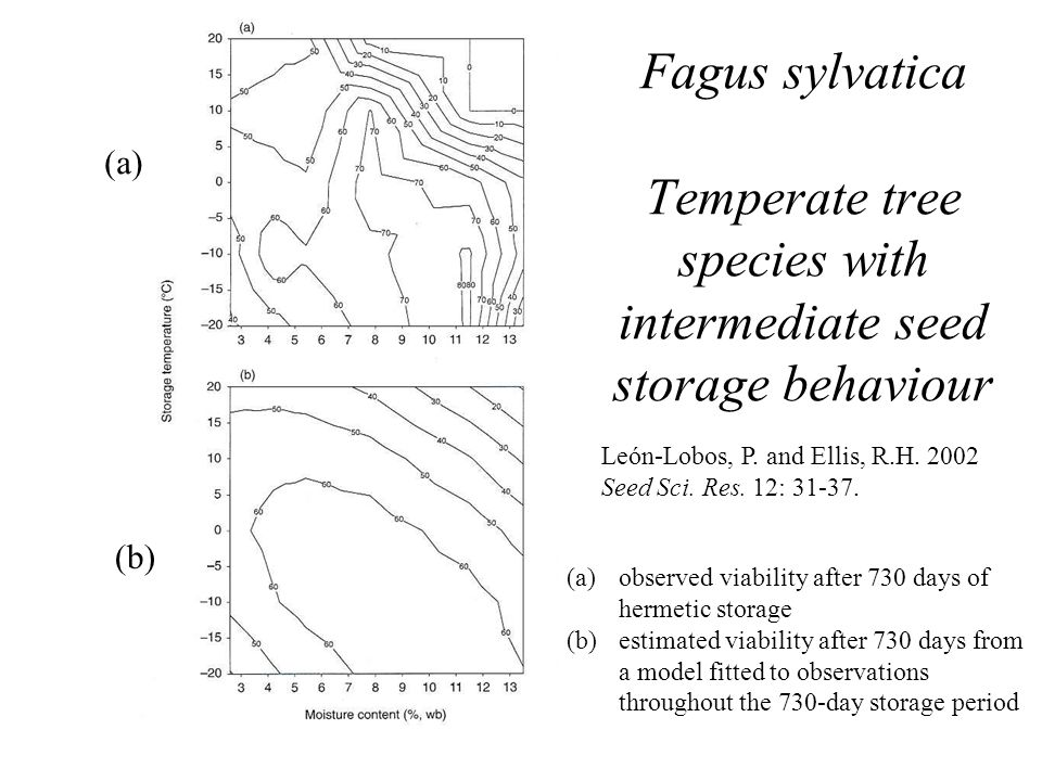 (a) Fagus sylvatica Temperate tree species with intermediate seed storage behaviour. León-Lobos, P. and Ellis, R.H. 2002.
