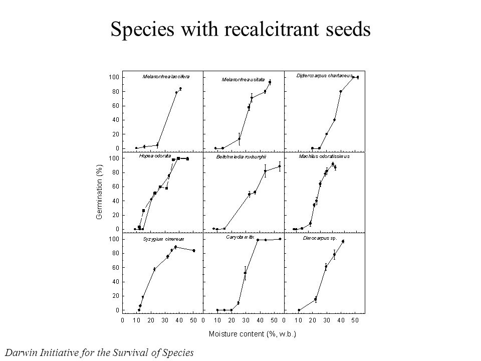 Species with recalcitrant seeds