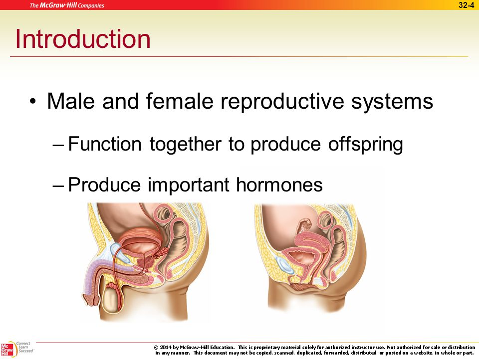 male and female reproductive system essay Read this essay on male and female reproductive system come browse our large digital warehouse of free sample essays get the knowledge you need in order to pass.