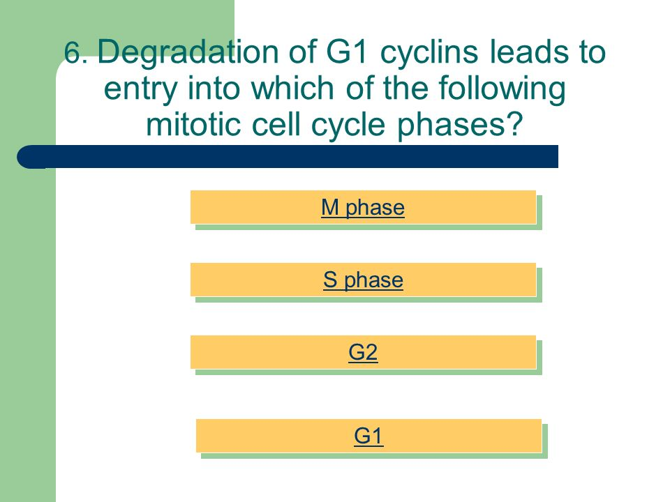 6. Degradation of G1 cyclins leads to entry into which of the following mitotic cell cycle phases