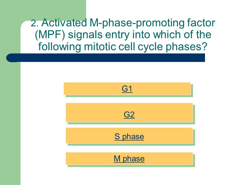 2. Activated M-phase-promoting factor (MPF) signals entry into which of the following mitotic cell cycle phases