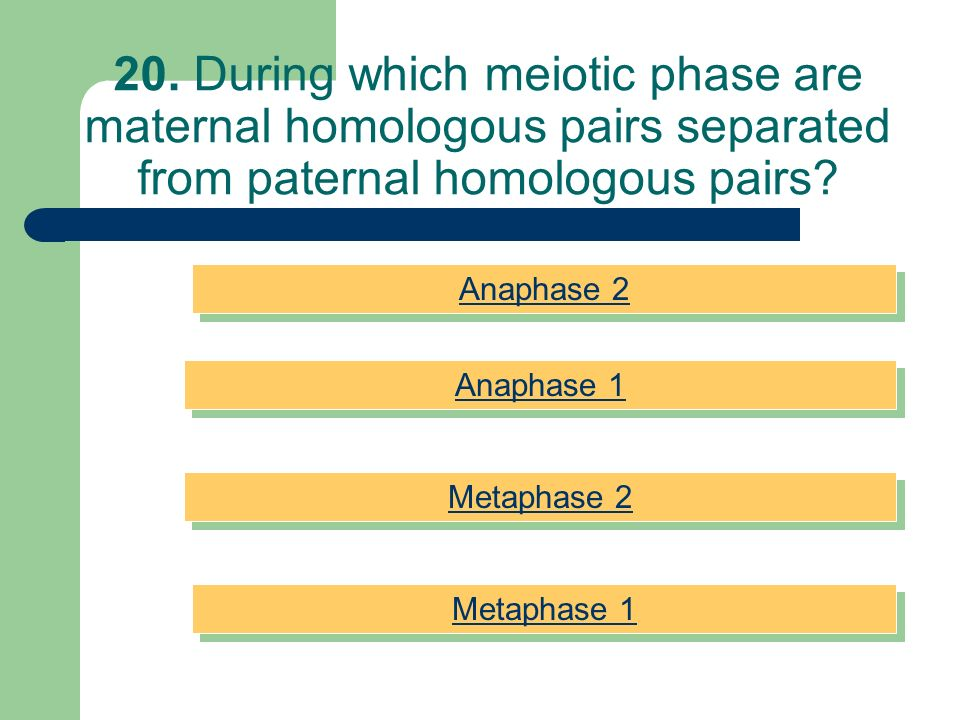 20. During which meiotic phase are maternal homologous pairs separated from paternal homologous pairs