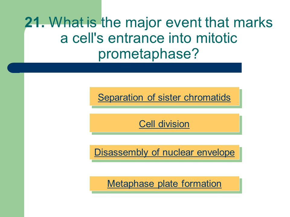 21. What is the major event that marks a cell s entrance into mitotic prometaphase