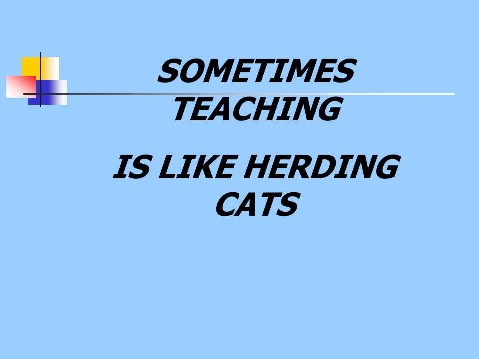 SOMETIMES TEACHING IS LIKE HERDING CATS