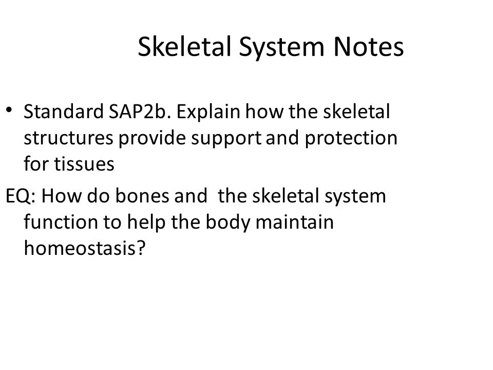 explain how systems interrelate to maintain homeostasis Describe how blood flow, blood pressure, and resistance interrelate 6 discuss how the neural and endocrine mechanisms maintain homeostasis within the blood vessels 7 describe the interaction of the cardiovascular system with other body systems 8 describe the development of blood vessels and fetal circulation.