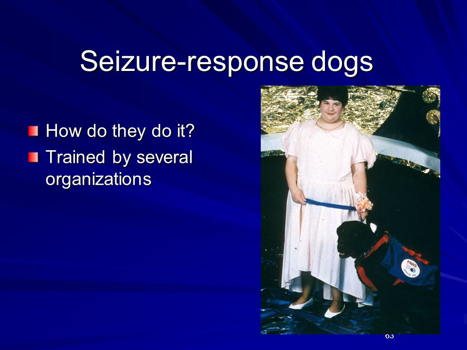 Seizure-response dogs