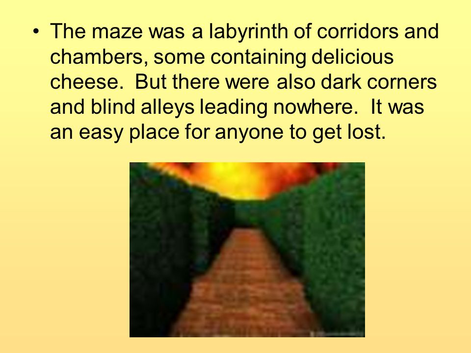 The maze was a labyrinth of corridors and chambers, some containing delicious cheese.