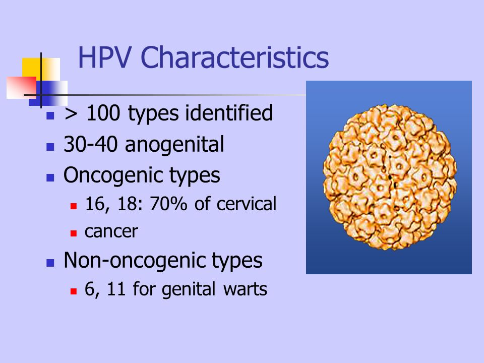 HPV Characteristics > 100 types identified 30-40 anogenital