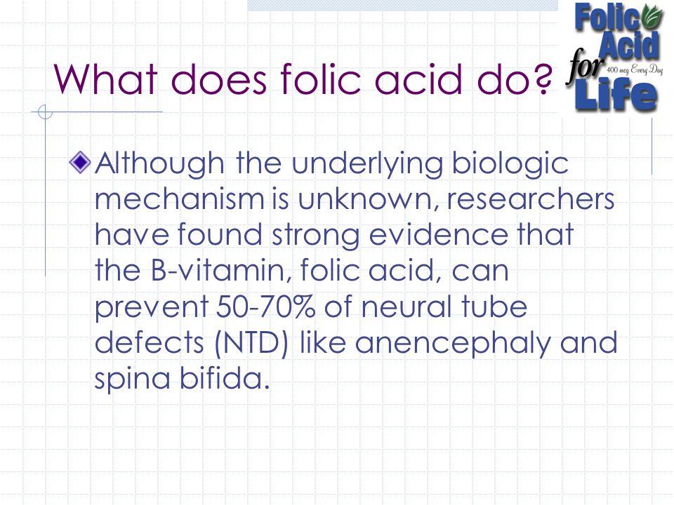 What does folic acid do