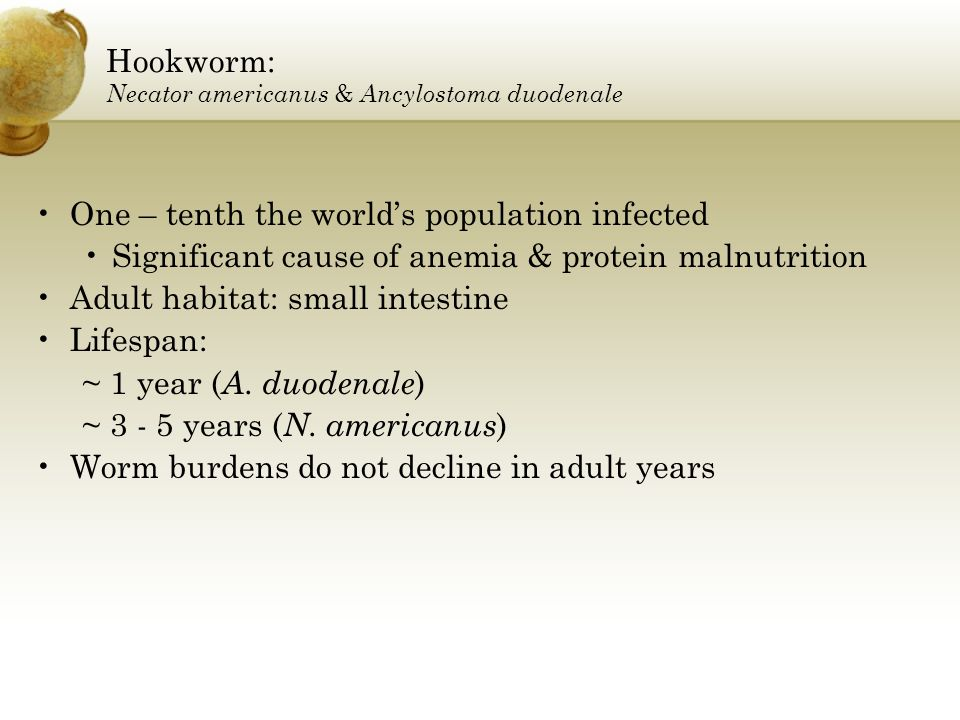 Hookworm: Necator americanus & Ancylostoma duodenale