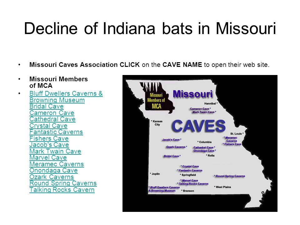 Decline of Indiana bats in Missouri