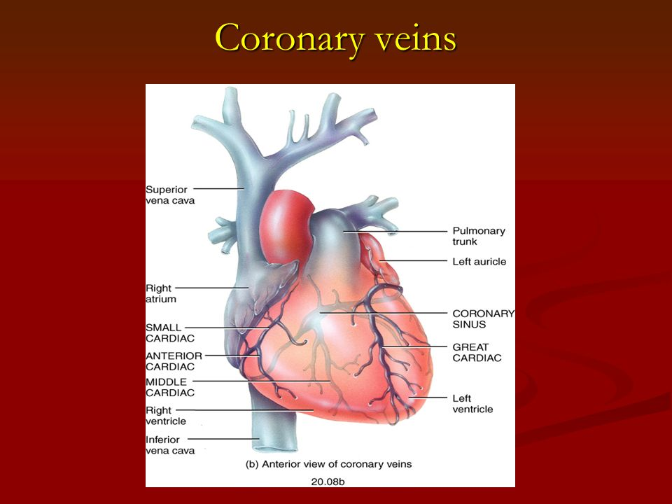 Portal venous system as well Green moreover Truncus Arteriosus moreover Thedeltopectoralgroove 30418902x likewise 2018 01 23. on heart and circulatory system