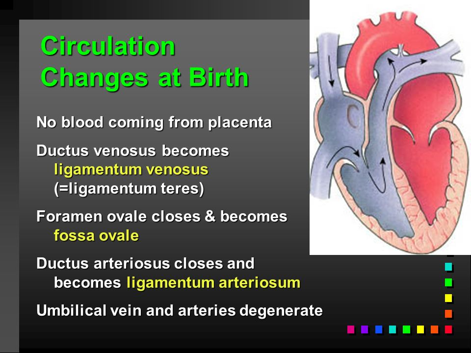 CH 22: The Cardiovascular System: Vessels & Circulation ...