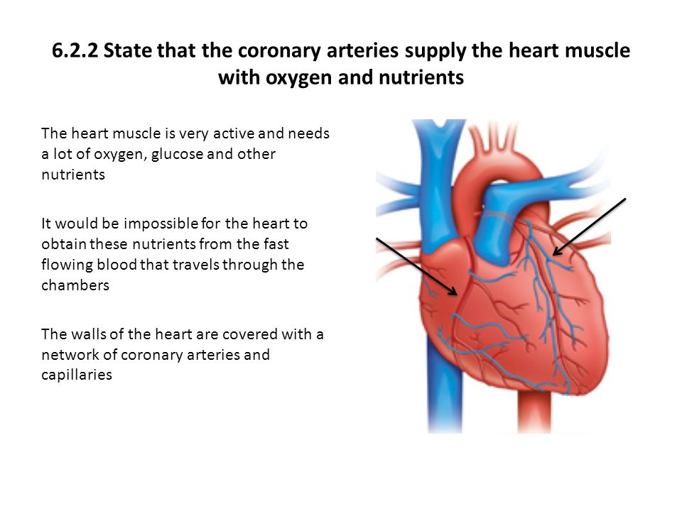 621 draw and label a diagram of the heart showing the four 622 state that the coronary arteries supply the heart muscle with oxygen and nutrients ccuart Image collections