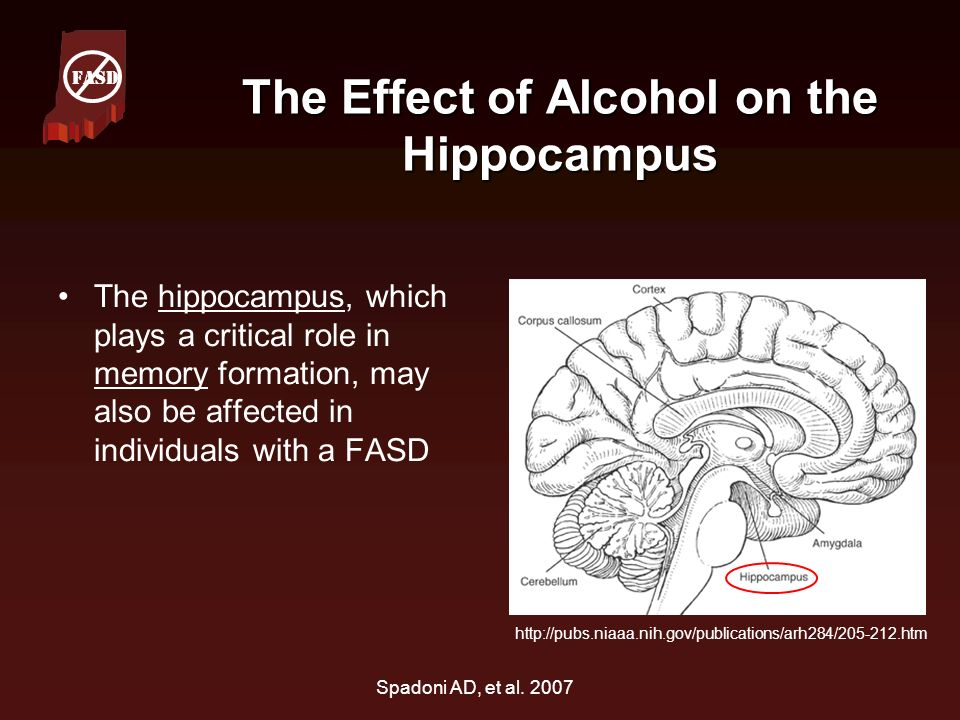 The Effect of Alcohol on the Hippocampus