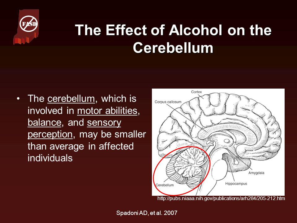 The Effect of Alcohol on the Cerebellum
