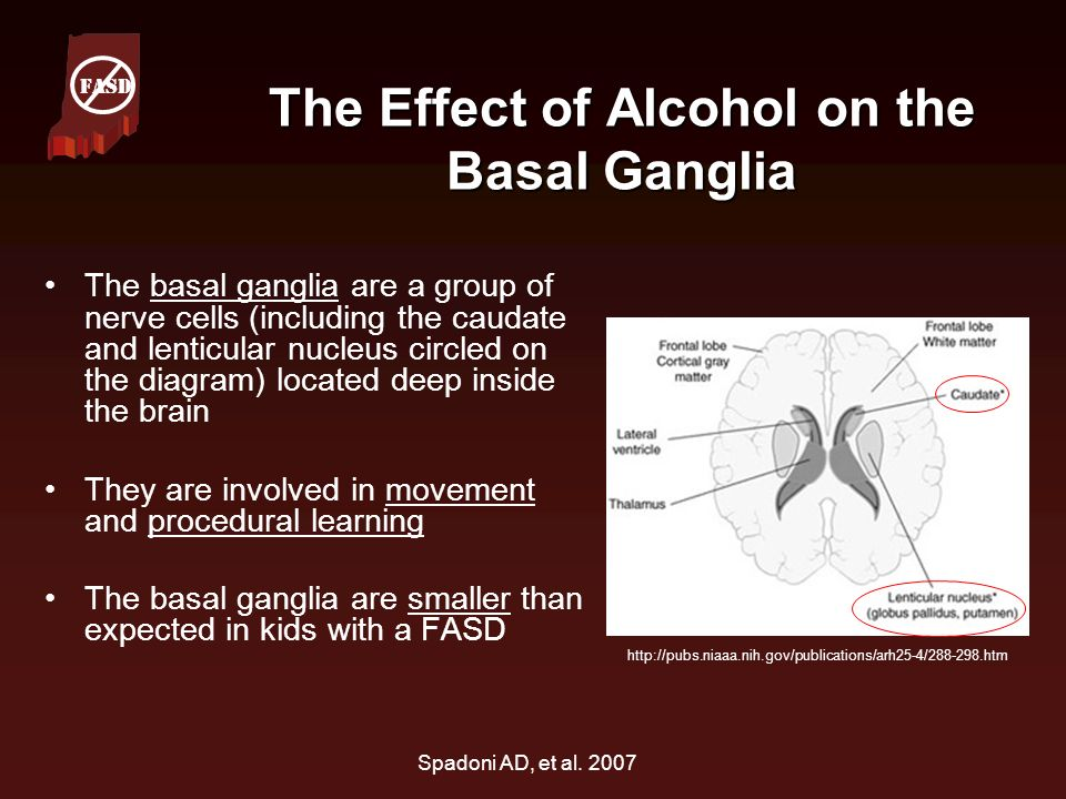 The Effect of Alcohol on the Basal Ganglia