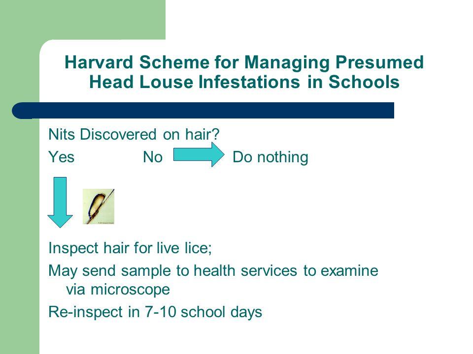 Harvard Scheme for Managing Presumed Head Louse Infestations in Schools
