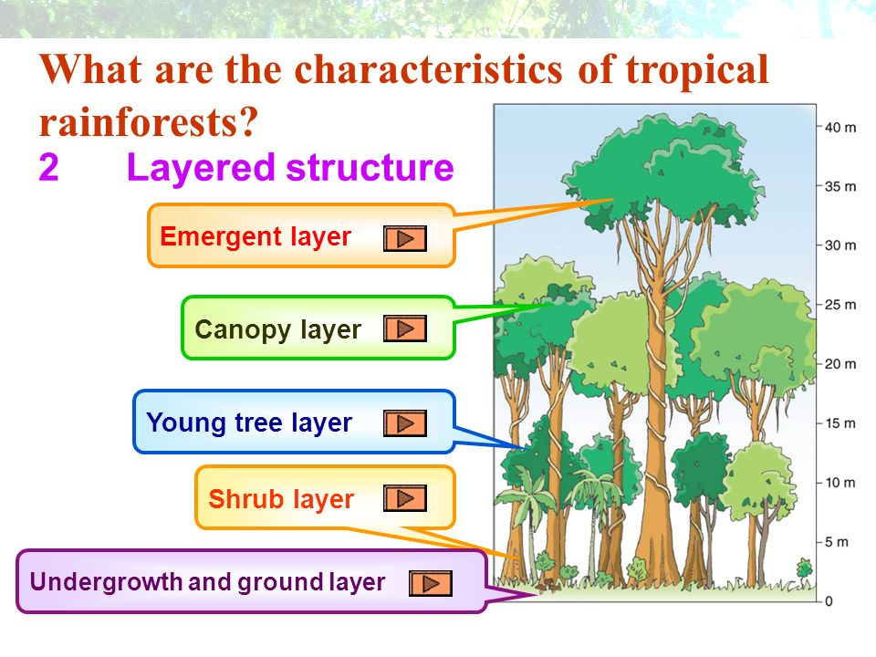 Tropical rainforests generally consist of ______ layers.  sc 1 st  SlidePlayer & Tropical Rain Forest - Man-land relationship. - ppt video online ...