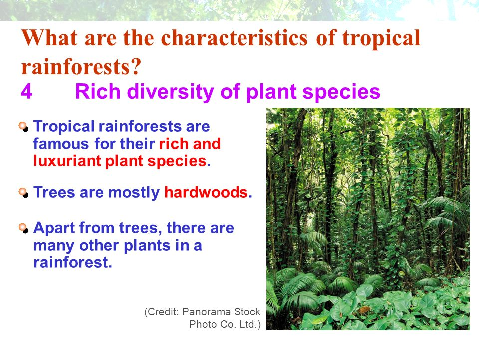 Adaptive features of plants in the tropical rainforest