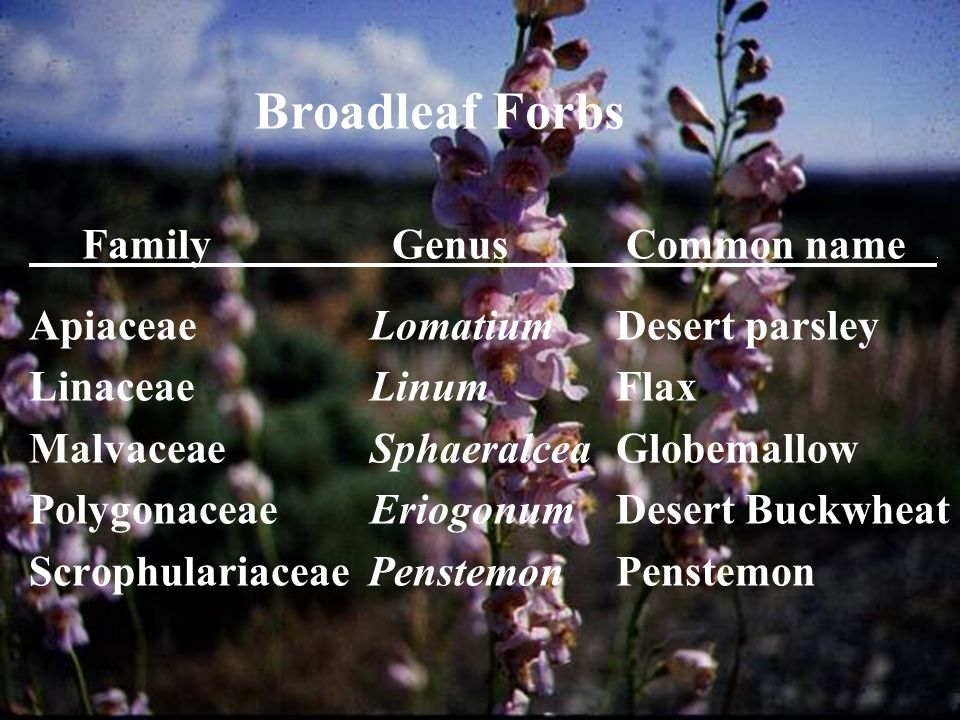 Forbs Broadleaf Forbs Family Genus Common name .
