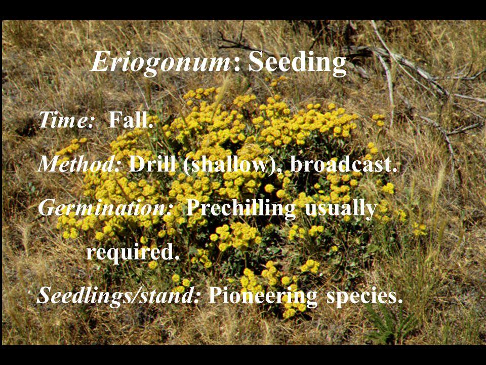 Eriogonum: Seeding Time: Fall. Method: Drill (shallow), broadcast.