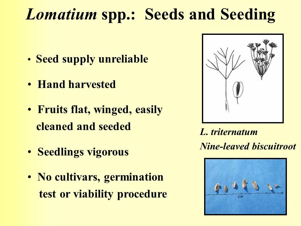 Lomatium spp.: Seeds and Seeding