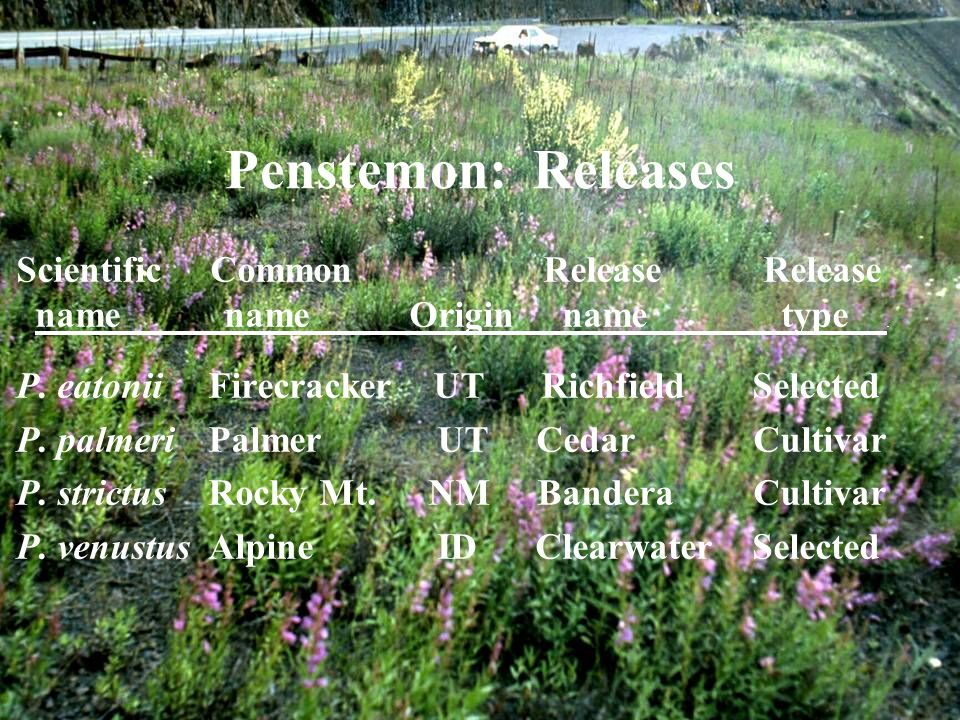 Penstemon: Releases Scientific Common Release Release