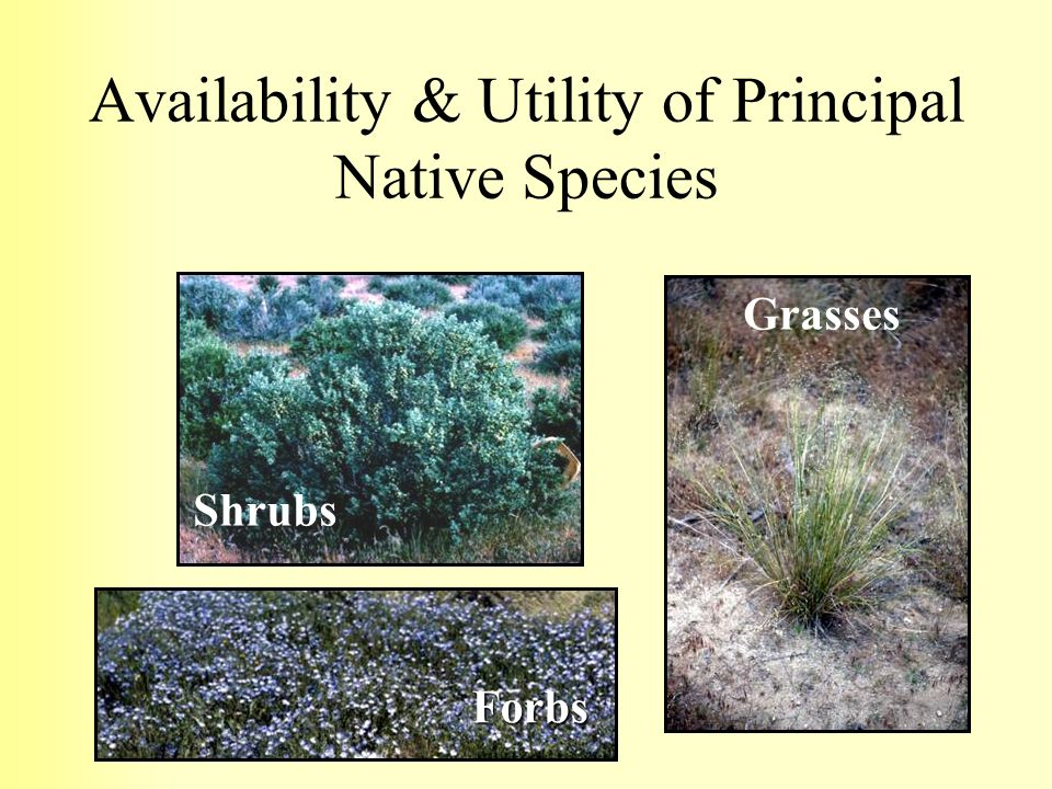 Availability & Utility of Principal Native Species