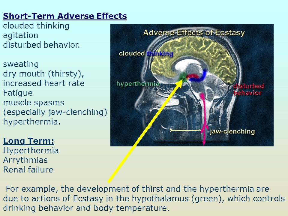 endocrine system affects human behavior Ib psychology notes on the biological level of analysis: physiology and behaviour - using one or more examples, explain functions of two hormones in human behaviour.