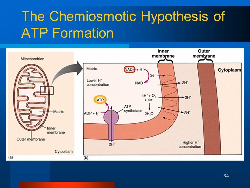 Cytoplasm flow hypothesis