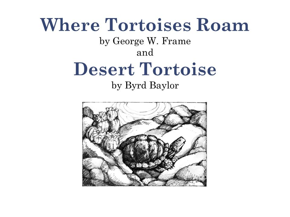 Where Tortoises Roam by George W