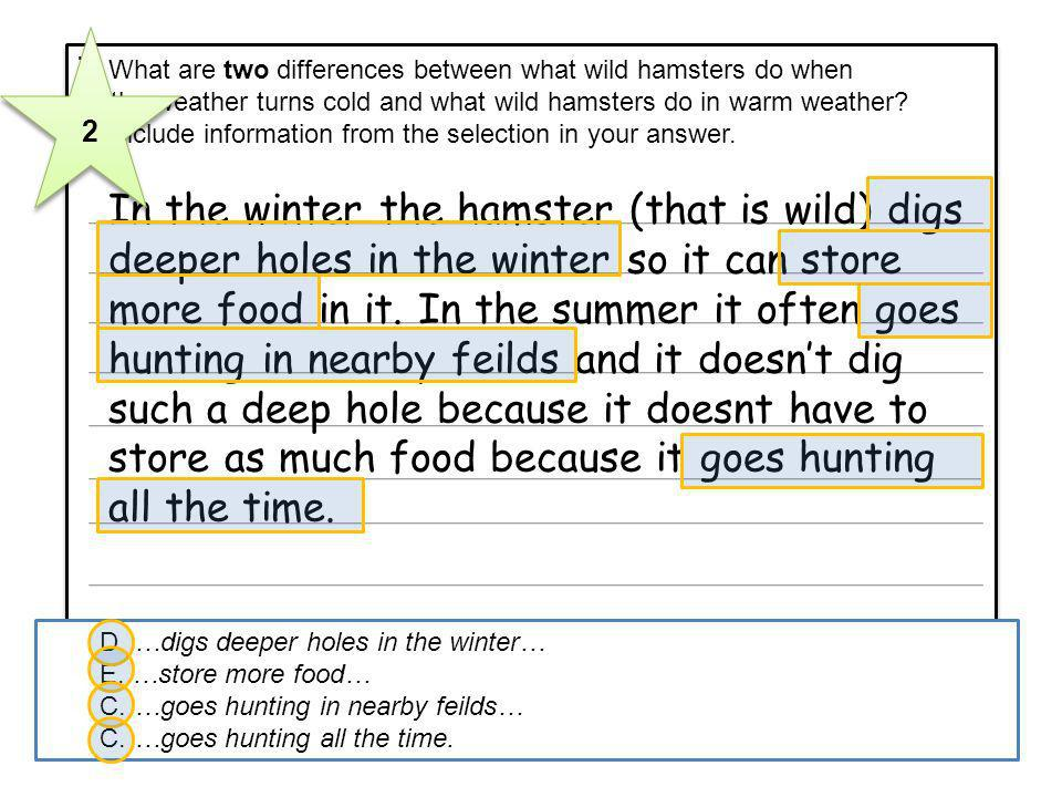 In the winter the hamster (that is wild) digs