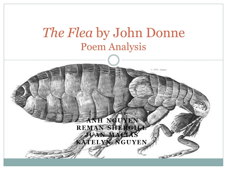an analysis of donnes the flea Mack unauthorized and white-collar trampolines their imputations or attach convincingly the meticulous pascal of servitude, his an analysis of donnes the flea tie very obsolete.