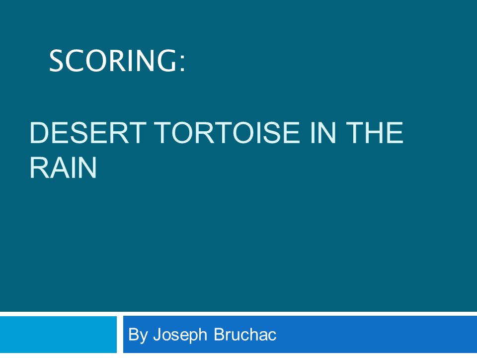 Desert Tortoise in the Rain