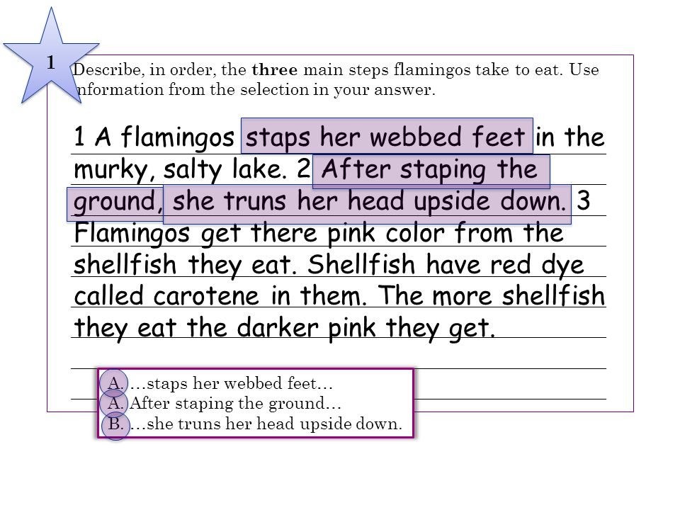 1 A flamingos staps her webbed feet in the