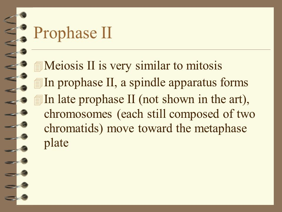 Prophase II Meiosis II is very similar to mitosis