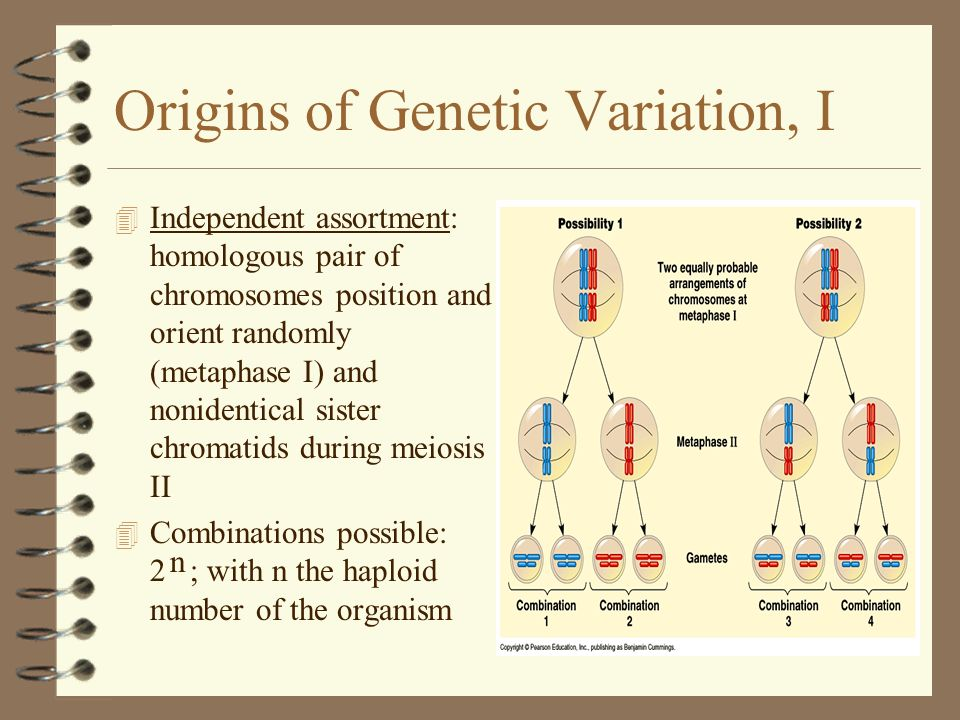 Origins of Genetic Variation, I