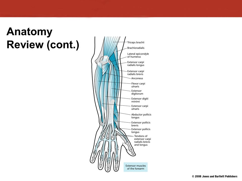 Anatomy review chapter 9 Custom paper Service